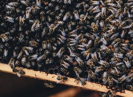 Breaking Beehive Behaviour