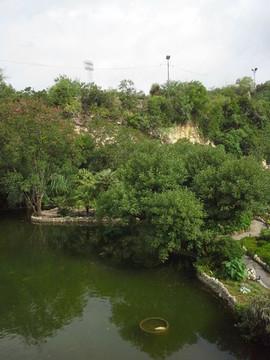 Pond area of the San Antonio Botanical G