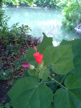 Water And Red Flower