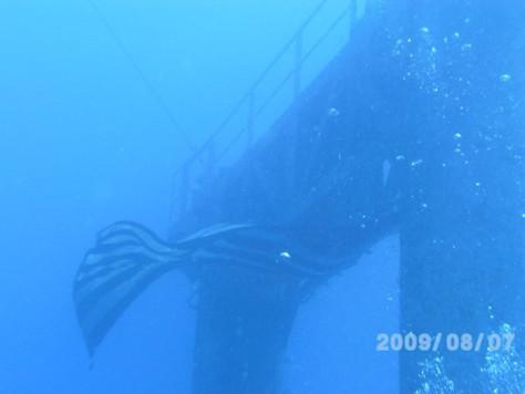 Post #5 of 7 Posts:The USS//USNS Vandenberg SCUBA Dive
