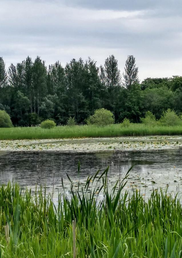 Bogside Pond