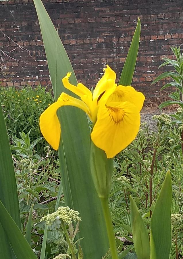 Iris 12.06.20