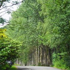 Colzium driveway