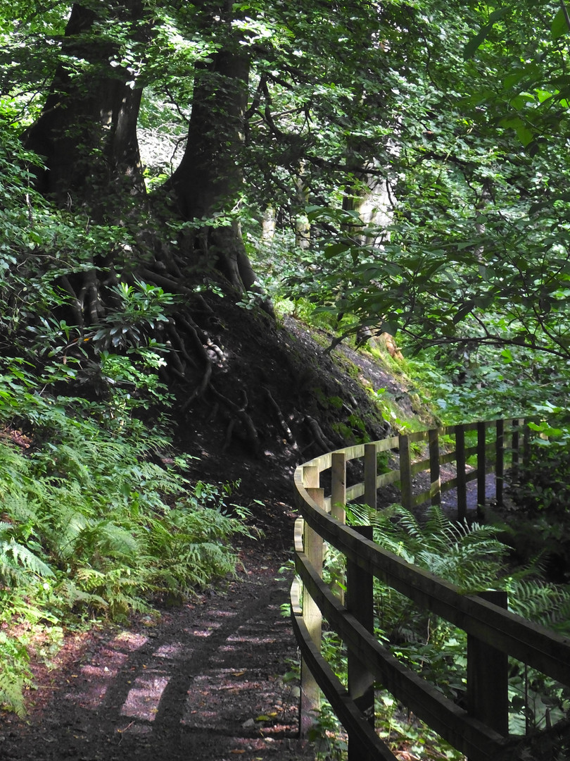 Path in the Colzium