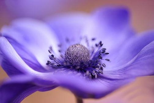 flower-3139424__340.jpg