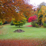 Trees in Colzium grounds