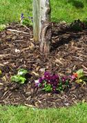 Flower Bed under Tree