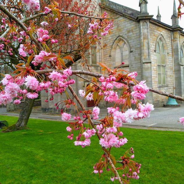 Kilsyth Burns & Old Parish Church