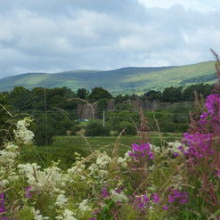 The Campsie Fells from canal