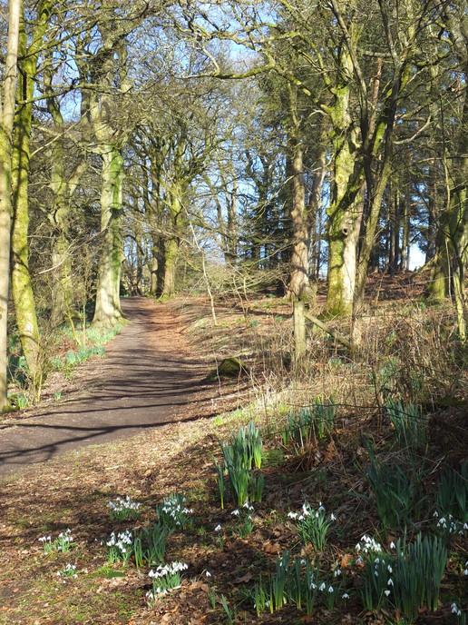 Path beside the burn, Colzium
