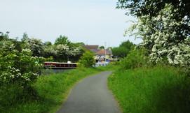 Hawthorn on canal path