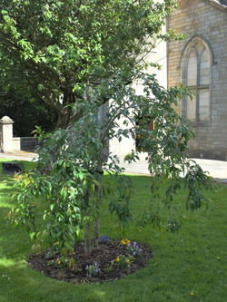 Bicentenial Tree 13 June 2021