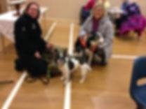 Rescue Dogs - Guild.JPG