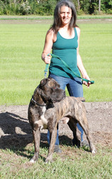 What Puppy Buyers Should Know About Cane Corso.