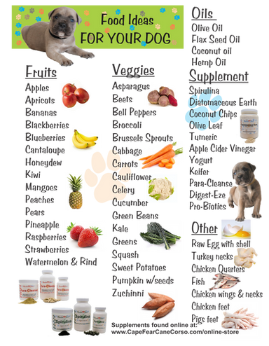 Foods Your Dog Can and Cannot Eat