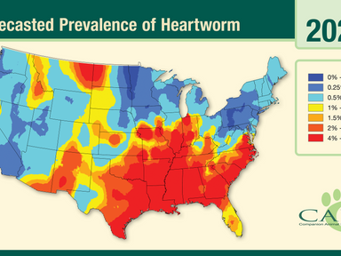Heartworm Medication Part 2: Options to Fear-Based Recommendations