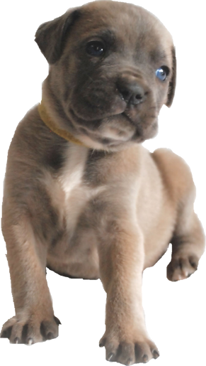 Puppy 2.png