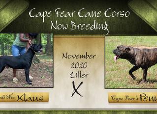 Custodi Nos Klaus(Alpha) x Cape Fear's Penny due November