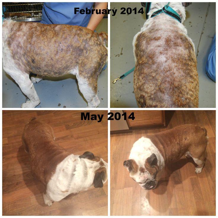 20bdd0d79ab339b48a4b7d56519788da--autoimmune-before-after