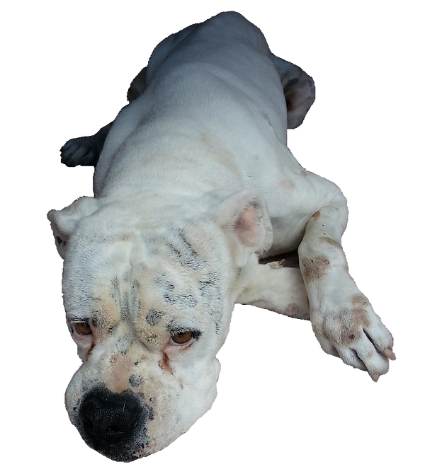 sickdog.png