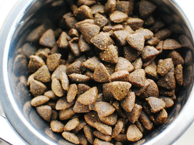 Kibble Proven To Cause Cancer in Dogs