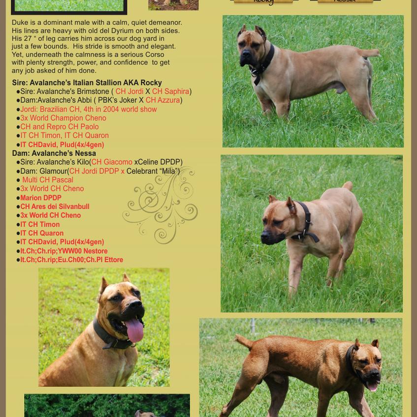 DogProfiles_Duke