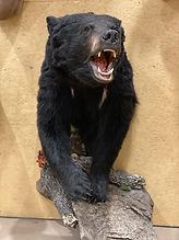bear 8.jpg