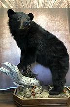 bear 6.jpg