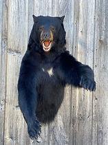 bear 11.JPG