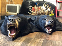 bear rugs.jpg