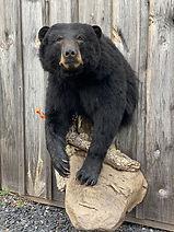 bear 12.jpg