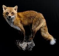 fox 5.JPEG