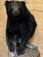 bear 7.jpg
