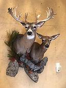 double deer.jpg