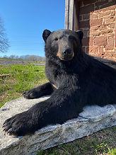 bear 10.jpg