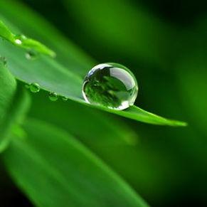 naturo(9).jpg