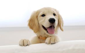 愛犬にドライフルーツをあげてもいいですか?