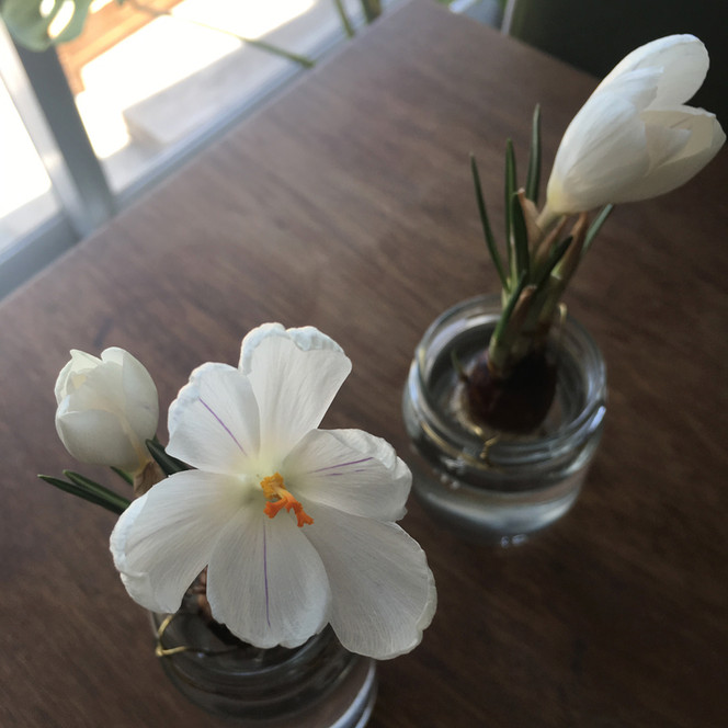 花がさいた