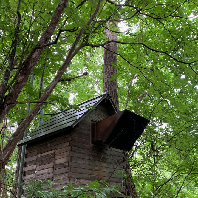 森の中のメルヘン