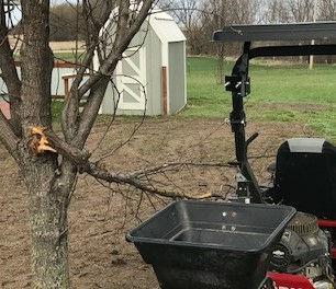 Opps Pear tree.jpg