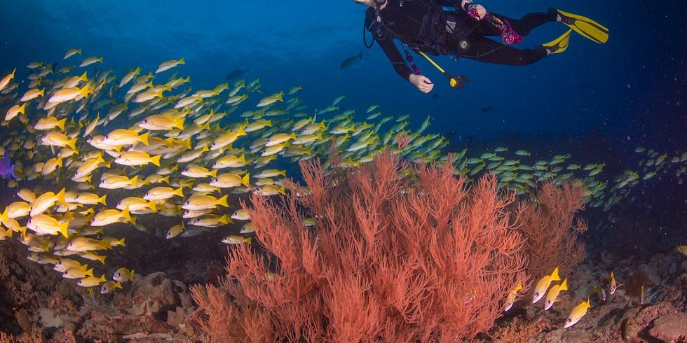 NASU户外讲座专场   深潜,带你领略奇幻海底世界!