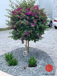 LandscapeDesignDelrayBeach1.jpg