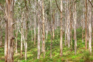 Boranup Forest Margaret River