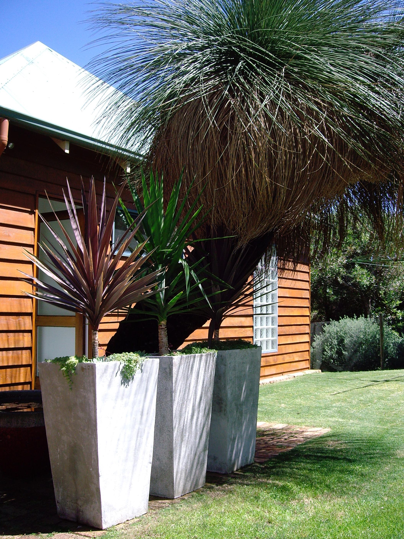 Outrigger grass tree