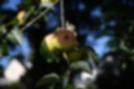 orchard dwelling