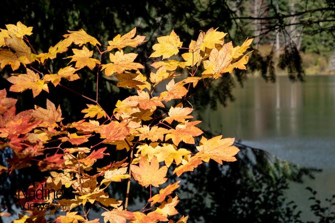Fall Colors at Gold Creek Pond.jpg