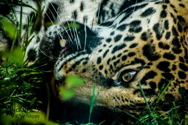 Woodland Park Zoo 5-6-2018-23.jpg