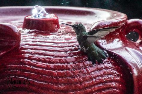 Hummingbird 2.jpg