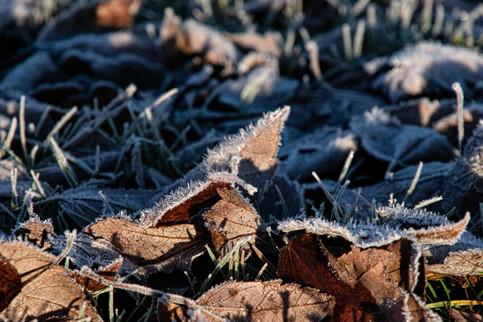Ice Crystals on leaves-1.jpg