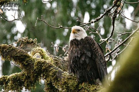 North Cascades 12-29-2020  12 sm wm-1.jp